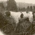 Uros AOTROU DE CORNOUAILLE, s. 1926, i. Potic II, e. Zile de Cornouaille