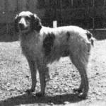Uros RAC II DE CALLAC,  (i.Quartz Guid, e.Lirette de Callac) 1920-luvulla.
