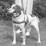 Uros IDOC DE CORNOUAILLE, s. 1930-luvun vaihteessa Ranskassa, vietiin Amerikkaan 1936. Idoc ja poikansa Kaer löytyvät lähes jokaisen amerikkalaisen ja myös monen ranskalaissyntyisen bretonin sukutaulusta.