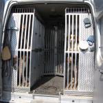 Ranskalainen koira-auto: 14 häkkiä ja n. 30 koiraa