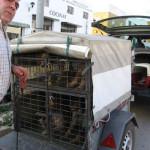 Taas yksi tyyli kuljettaa koiria