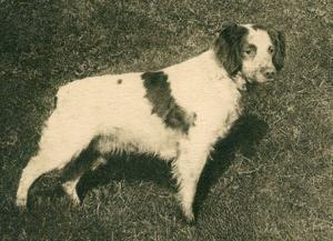 Uros POTIC II 1920-luvulla